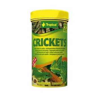 Crickets 100ml/10g