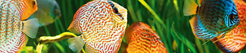 Aquarium Fish Food | Pet Market